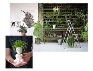 Выбор растений для квартиры