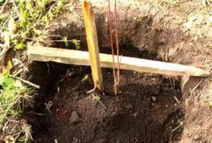 Подготовка ямы для жимолости