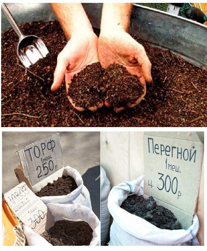 Состав почвы для жимолости