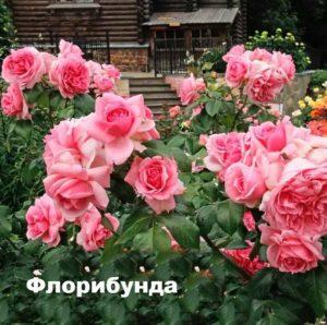 Внешний вид розы флорибунда