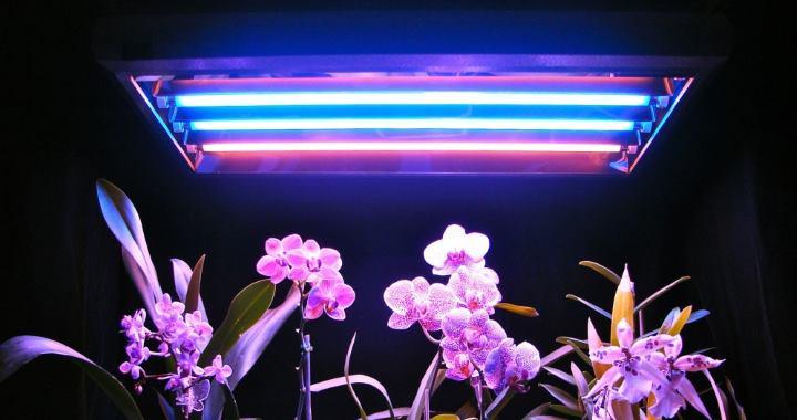 Вид фитоламп: Люминесцентные