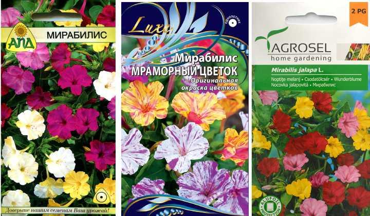 Пакетики семян мирабилиса