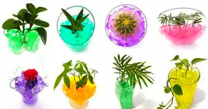 8 растений в гидрогеле