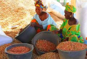 Урожай арахиса в Африке