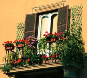 Летом на балконе: азалия