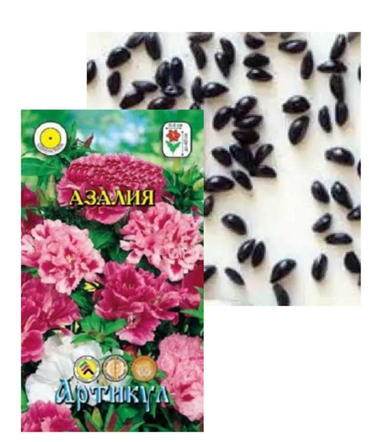 Семена растения Азалия