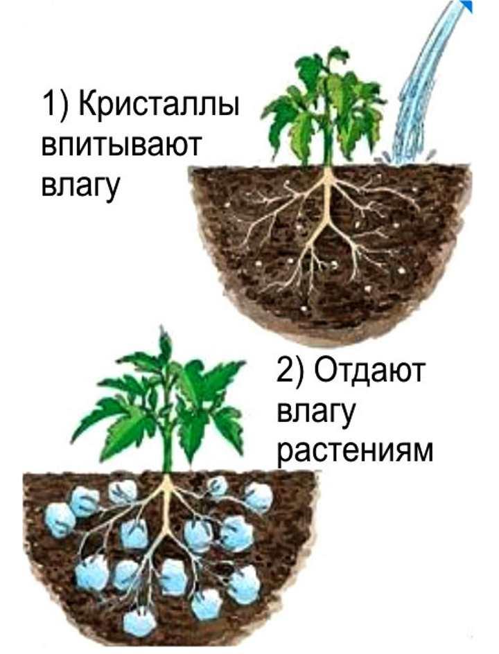 Схема действия гидрогеля
