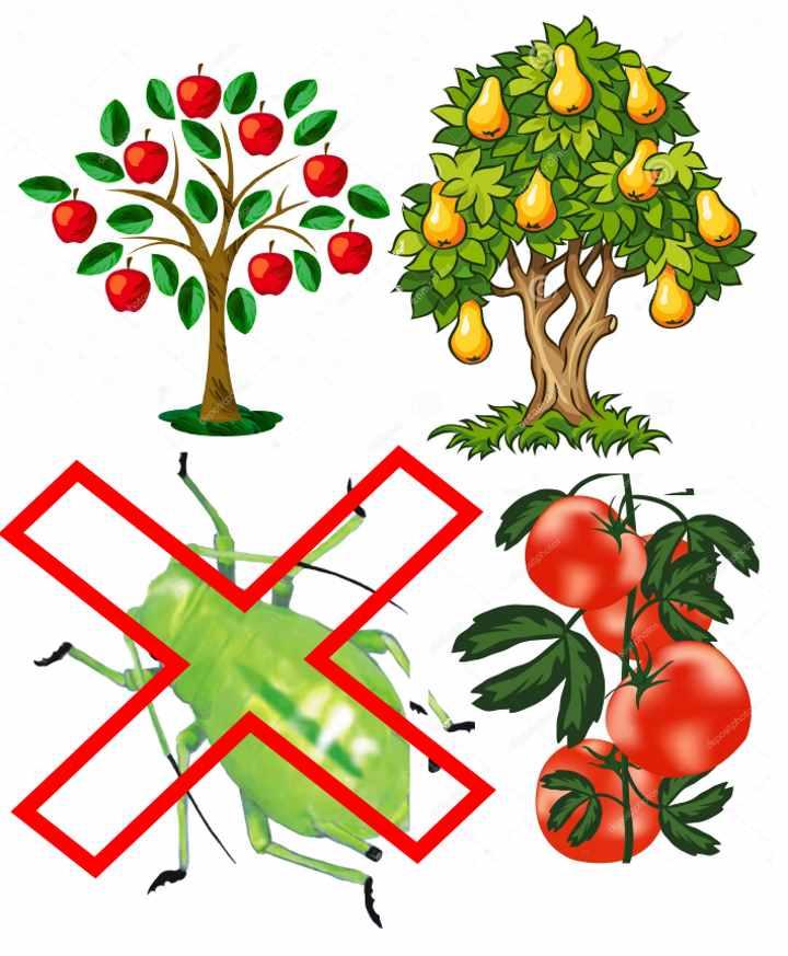 Плодовые деревья от вредителей