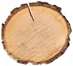 Срез дерева ольхи