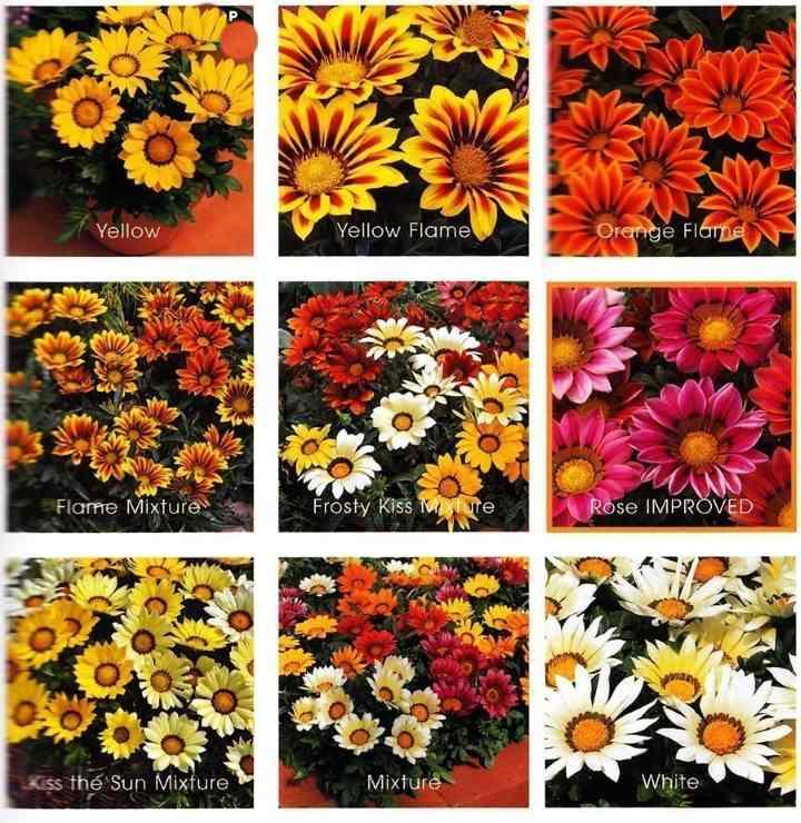 9 вариантов расцветок гацании