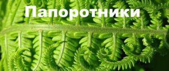 Кружевной лист папоротника