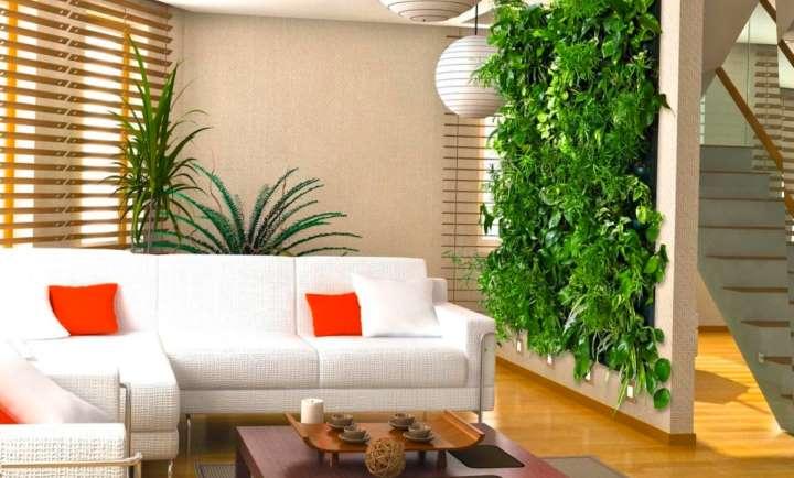 Вертикальное озеленение хойей