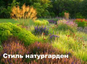 Ковыль в стиле натурального сада