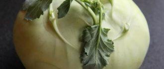Большая капуста кольраби