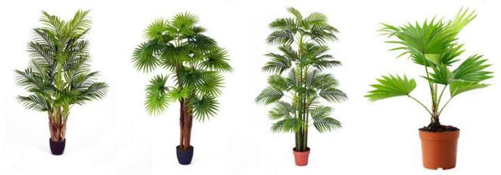 Горшечные пальмы в магазине
