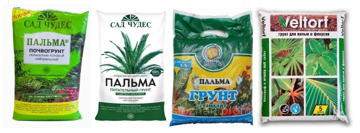 Грунты для выращивания пальмы