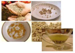 Обработка семян фундазолом