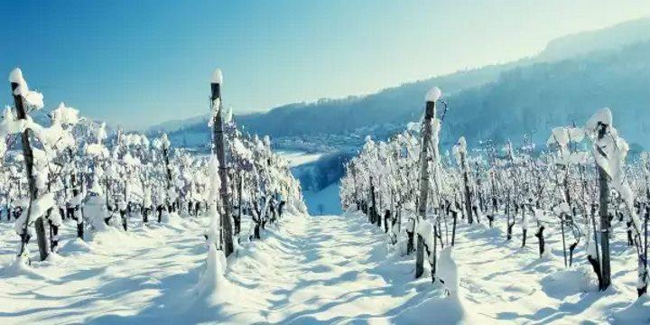 Процесс покоя зимой