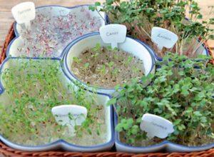 Гидрогель как грунт для семян