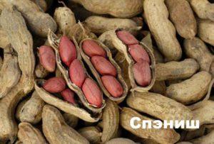 Сорт арахиса: спениш