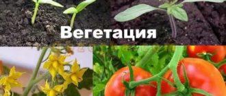Вегетация в картинках