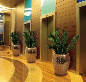 Замиокулькас в напольных вазах