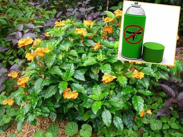 Кросндар в грунте и инсектицидное средство