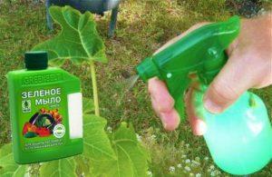 Зеленое мыло для опрыскивания сада от вредителей