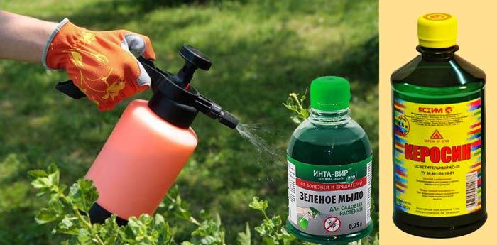 Опрыскиванеи сада раствором зеленого мыла и керосина