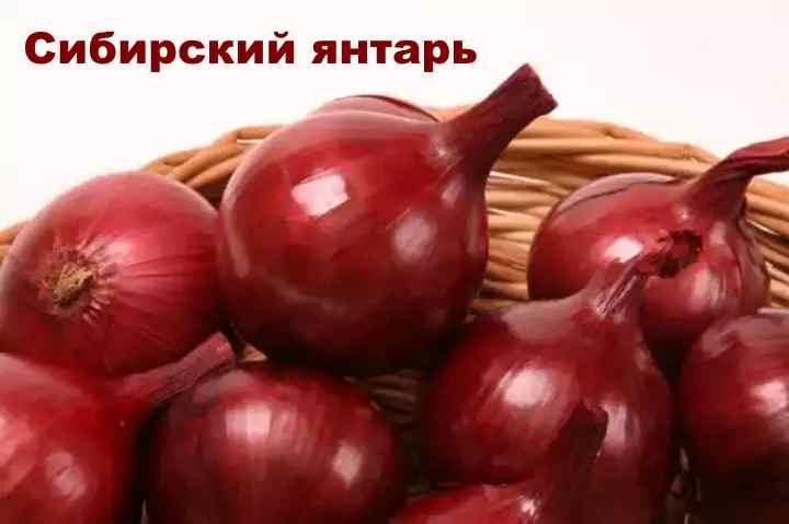 Сорт лука-шалот - Сибирский янтарь