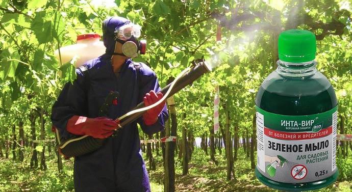 Сильное опрыскивание в саду зеленым мылом с защитными средстваим