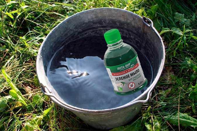 Ведро воды и зеленое мыло от болезней и вредителей