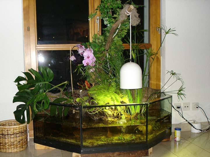 Отличие палюдариума от аквариума