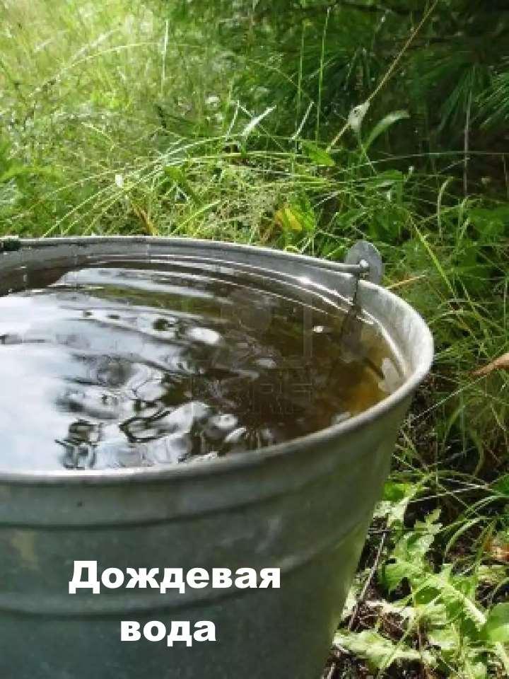 Вода для полива орхидей