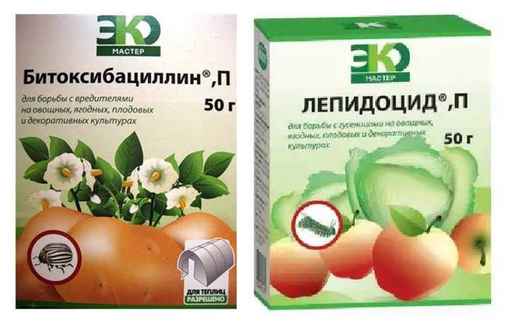 Препараты для декоративной капусты
