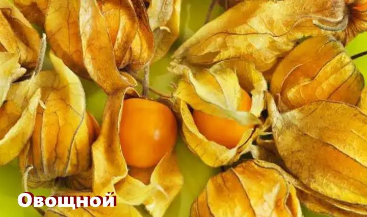 Вид растения - физалис Овощной