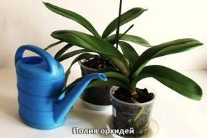 Полив орхидей и лейка