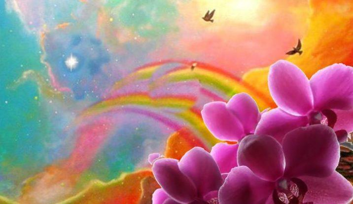 Радуга и орхидея