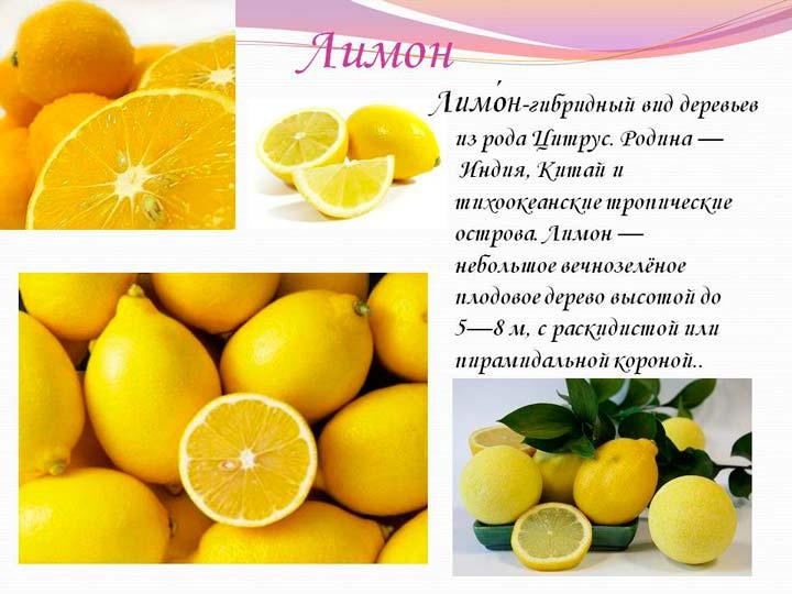 Родина выращивания лимона