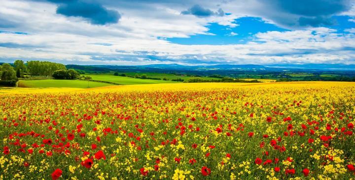 Луговые цветы солнечным днем