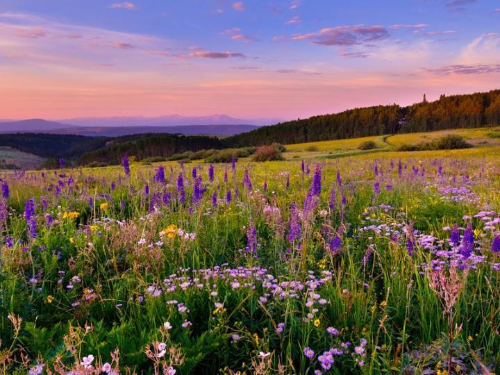 Луговые и полевые цветы список названий и фото растений
