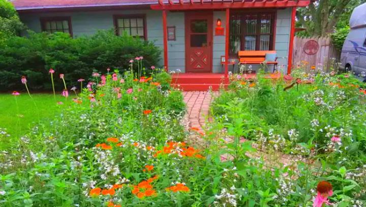 Во дворе дома луговые цветы
