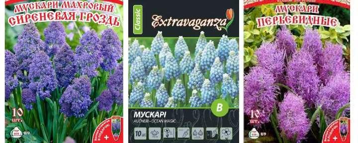 Пакетики семян мускари