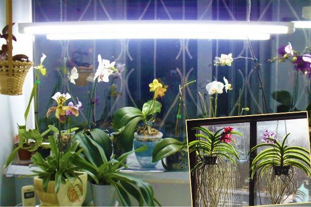 Освещение для орхидей Ванда