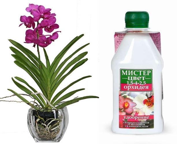 Удобрение для орхидей и орхидея Ванда