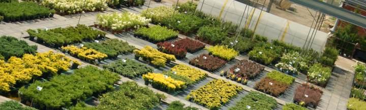Участки разведения растений в питомнике