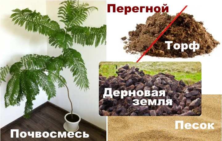Состав почвы для жакаранды