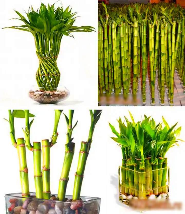 Виды поставки бамбука