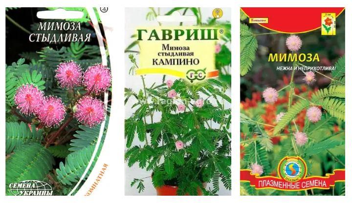 Пакетики семян мимозы