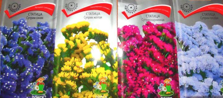4 пакетика семян статицы